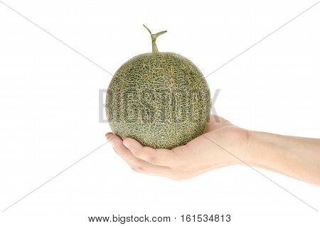 Hand holding cantaloupe green melon isolate on white