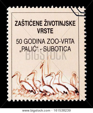 YUGOSLAVIA - CIRCA 2001 : Cancelled stamp printed by Yugoslavia, that shows Birds.