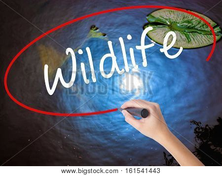 Woman Hand Writing Wildlife  With Marker Over Transparent Board