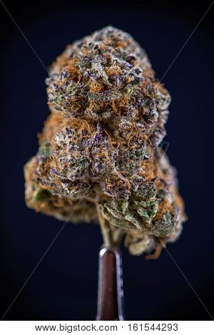 Detail of dried cannabis flower (green crack god strain) isolated over white background