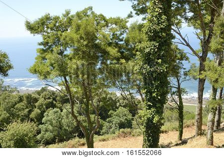 View of the Atlantic Ocean through of the trees at the mountain of Santa Tecla in Galicia Spain.