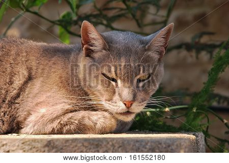 Angry street cat lying on a wall. Close up shot