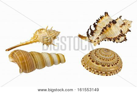 the sea shells on a white background