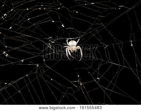 Spider. Macro nature. Close up of garden spider on natural black background. Scary halloween card