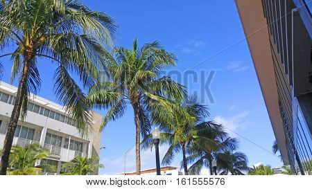 Row of palm trees with blue sky background