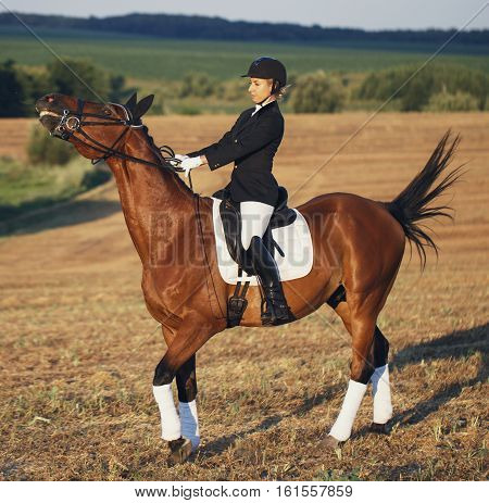 Beautiful elegance woman cowgirl, riding a horse. Has slim sport body. Portrait nature. People and animals. Equestrian. Close up.