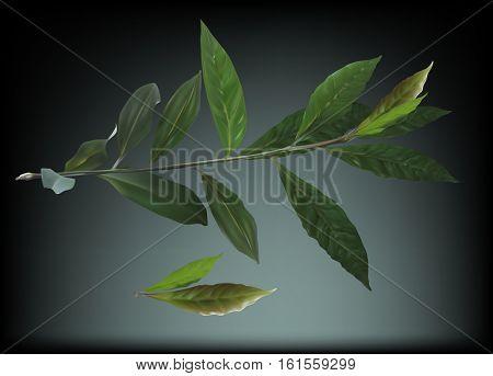 illustration with green laurel branch on dark background
