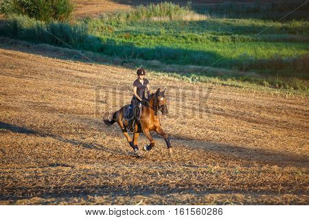 Beautiful elegance woman cowgirl, riding a horse. Has slim sport body. Portrait nature. People and animals. Equestrian.