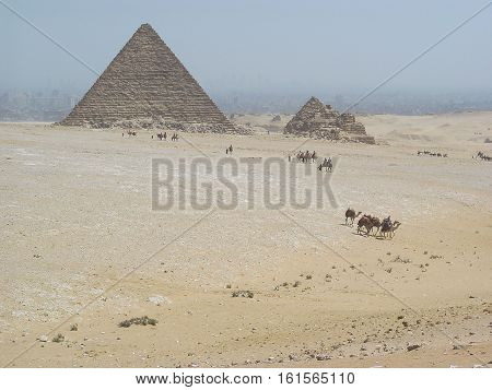 Egypt Pyramids in sandstorm scenery with camels