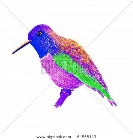 Hummingbird with colorful glossy plumage. Modern pop art style. Colorful bird, white background. Vector illustration of colibri for greeting card,invitation,print,web project. Bright and vivid colors.