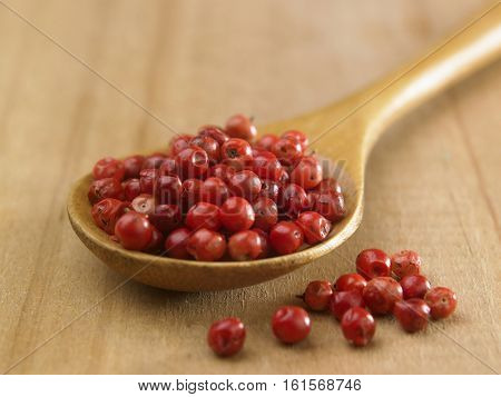 Red peppercorn or Brazil Pepper on wooden spoon