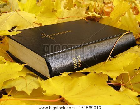 Bible. Holy Bible book with autumn yellow maple leaves.