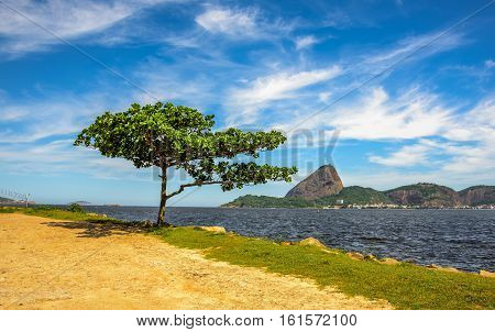 Lonely standing green tree and Guanabara Bay at sunny day with Sugarloaf Mountain in the background, Rio de Janeiro, Brazil