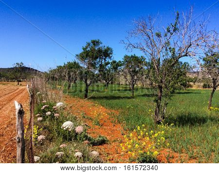 Countryside in Ibiza, in the spring on a sunny day