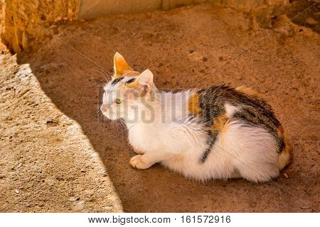 Still Inhabited By Old Medina In Ouarzazate, Morocco