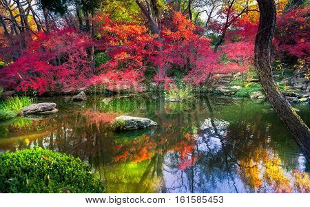 A burst of fall color with pond reflections