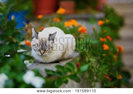 White cat sleeping outdoors surrounded by flowers