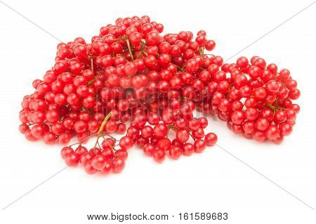 Bunch of red berries- guelder rose isolated on a white background with clipping path