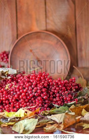 Red Berries And Viburnum Branches