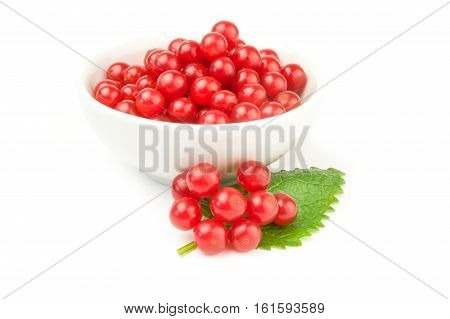Red berries cluster of guelder rose  isolated on a white background with clipping path