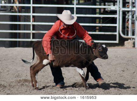 Holding Calf