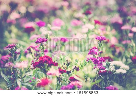 flower in the field made with vintage tone style