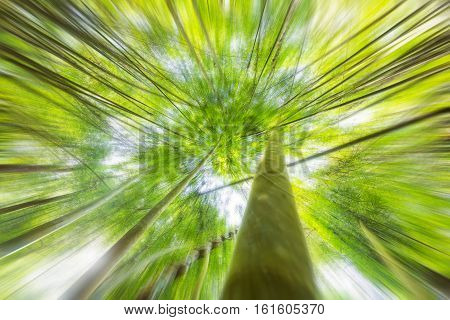 Abstract background of forest. Radial zoom effect defocusing filter applied with vintage instagram look. Nature background.