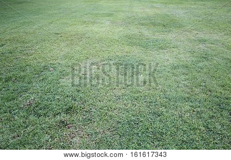 Lawn grass greensward courtyard,field, grass, green, ground,