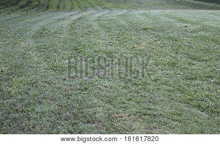 Lawn grass greensward courtyard park, natural, summer