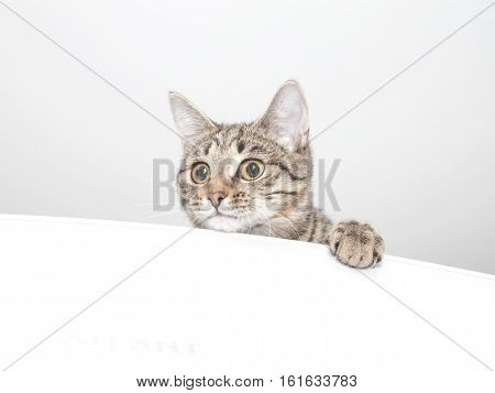 Playful curious cat face. Cute kitten portrait
