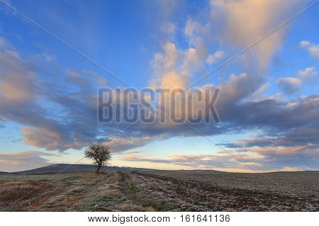 Hilly winter landscape.Between Apulia and Basilicata:lonely tree dominated by clouds at sunset.Italy.Country road on a cold winter morning.