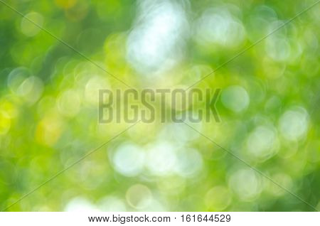 Nature Green Bokeh Sun Light