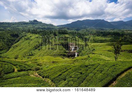 Sri Lanka, Lush Tea plantation, Nuwara Eliya