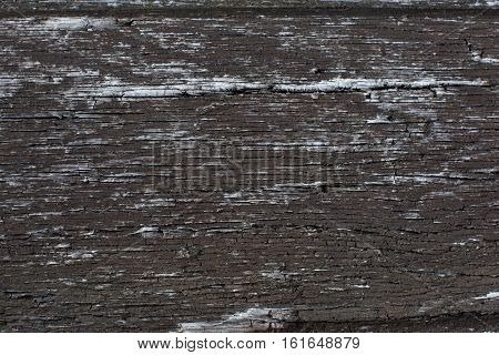 Tree Surface Texture