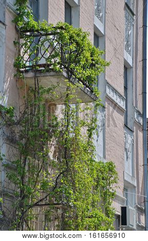 A porch twined with ivy. Andrew's descent. Kiev.