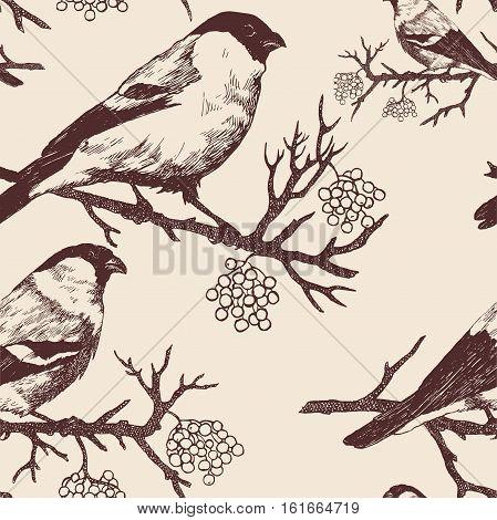 Seamless bullfinch pattern. Hand drawn vector. Vintage style