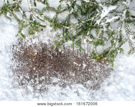 Christmas tree on a wooden board with snow, Christmas green framework with snow