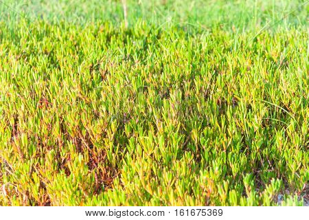 Close up of green grass for background