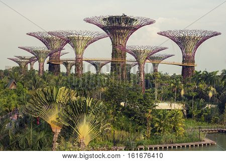 Singapore - 01 November 2014: Supertrees in garden by the bay at Bay South Singapore
