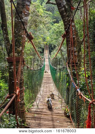 Long hanging bridge at primate rescue center near Plettenberg Bay, South Africa
