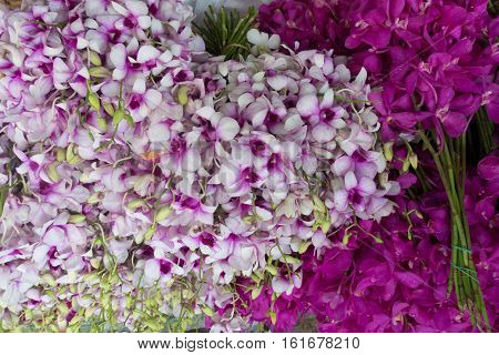 purple and white orchids flowers for sell in Pak Khlong Talat Bangkok's largest flower market