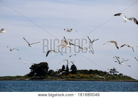 many flying sea- gulls in the near of a ocean