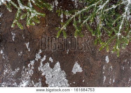 Christmas tree on a wooden board with snow, Christmas green framework snow