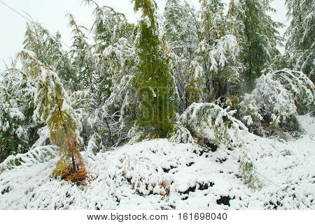 Winter forest. Winter has come. Forest covered in snow. Snow lies on each branch, each blade of grass. Snow brought all the trails and roads. All around snow drifts. According drifts very hard to pass. But the forest is very beautiful in the winter.