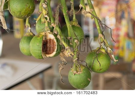 Close up of betel nut with burr background.