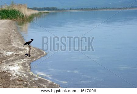 bird on a beach of prespa lake resen macedonia poster