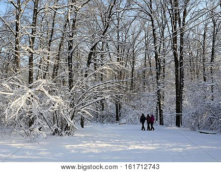 View of snow covered winter park in sunny day.Winter forest covered with snow.Winter background.