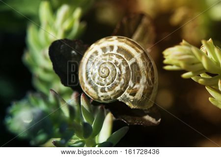 snail on flower. snail shell and violet flowers