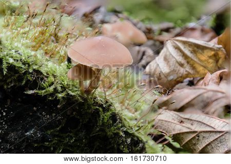 macro fungi and moss and autumn leves