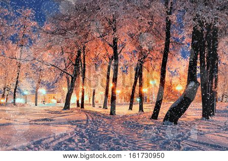 Winter night landscape - city winter park with frosty winter trees under falling winter snowflakes, bright night winter landscape with winter anowfall. Winter background